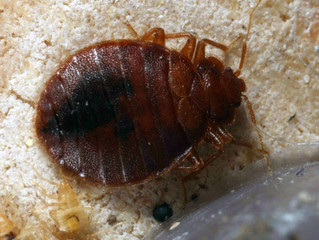Bed Bug Repellents That Could Keep Your Luggage Pest-Free