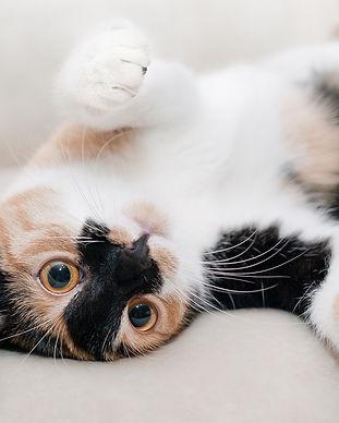 cotteridge cat sitters.jpg