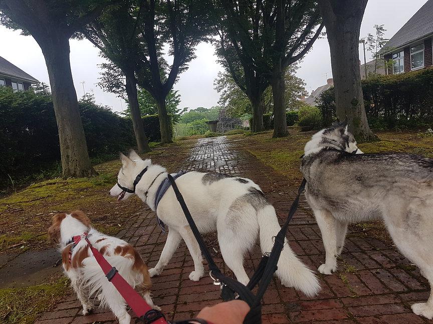 dog walkers on Brandhall