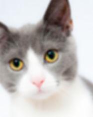 stirchley cat sitters.jpg