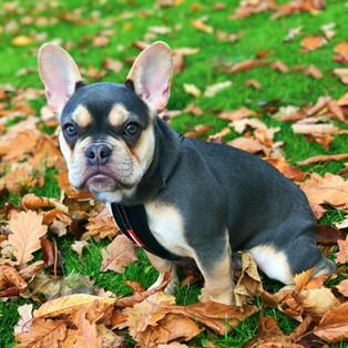 Looking For Halesowen Dog Walkers ?
