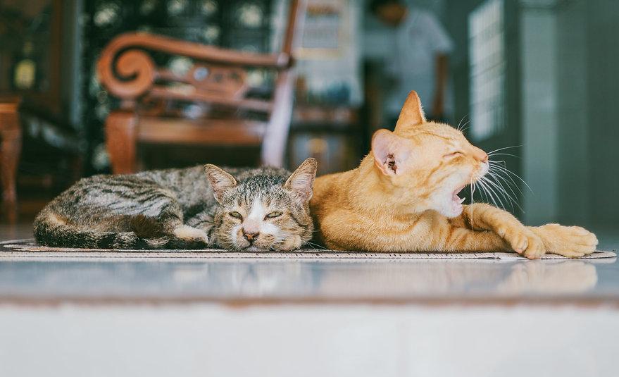 Cat Rehoming Birmingham - Wellcat