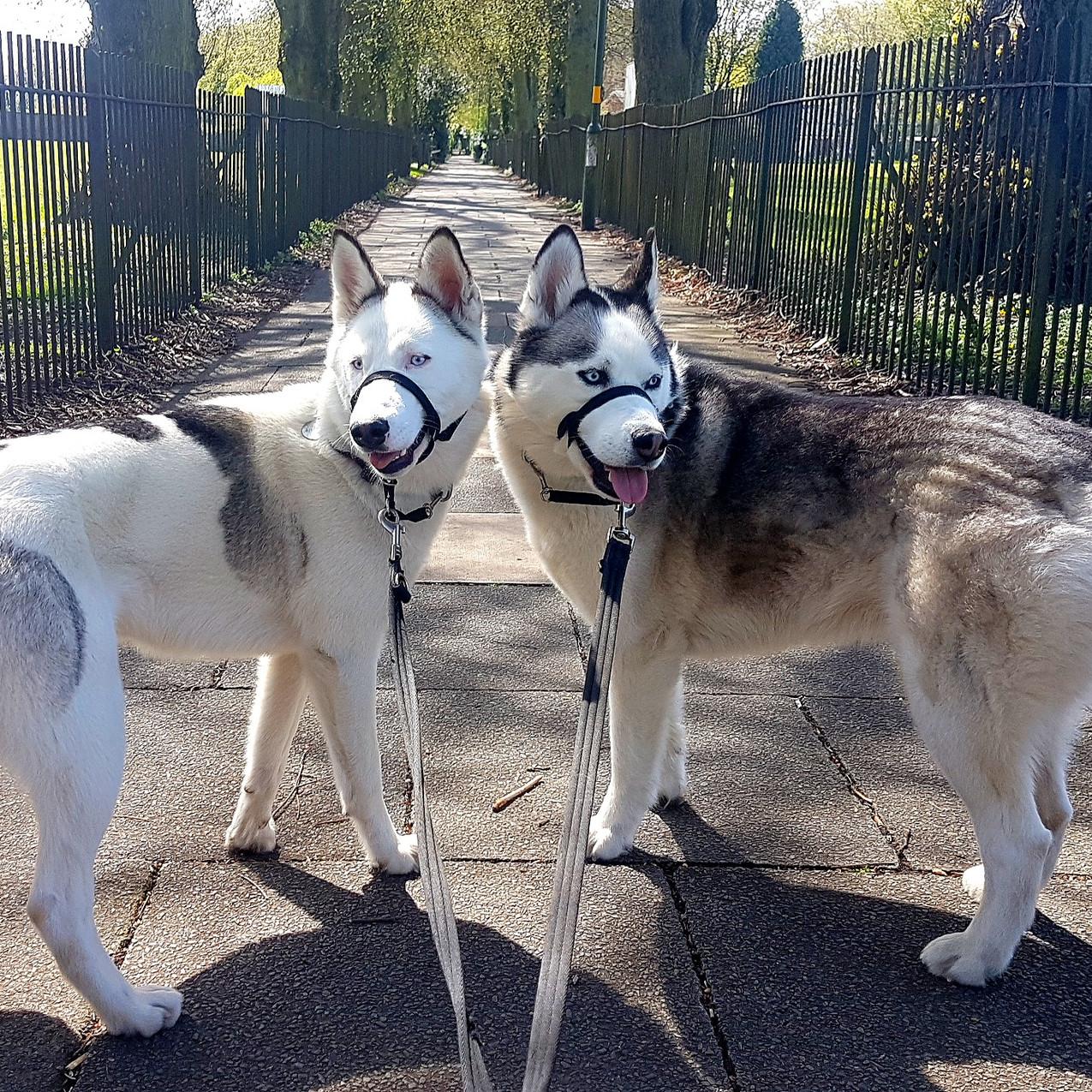 Stourbridge Dog Walker