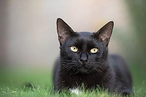 Birmingham cat sitters.jpg