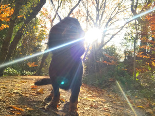 Autumn Dog Walking In Harborne