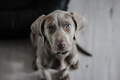 Macclesfield dog walker
