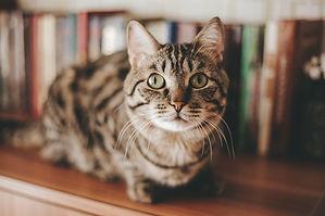 Cat sitting in Birmingham