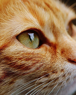 harborne cat sitter.jpg