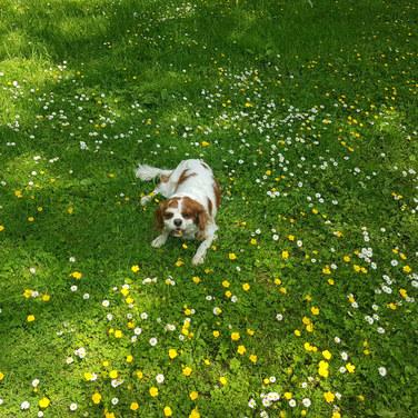 Maisie in the sunshine