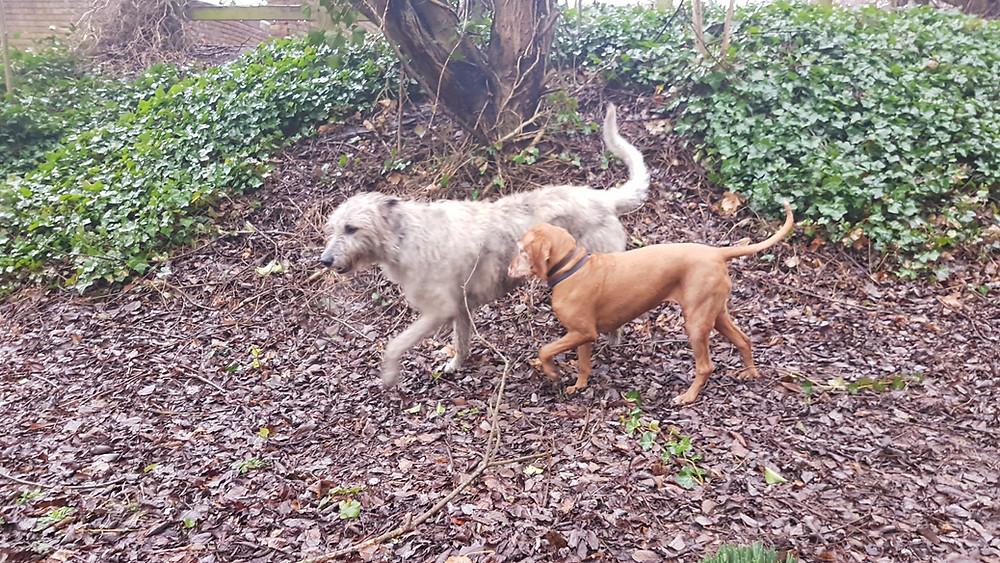 Saturday morning dog walks in Edgbaston