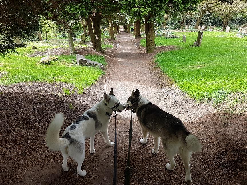 Dog Walker In Shirley