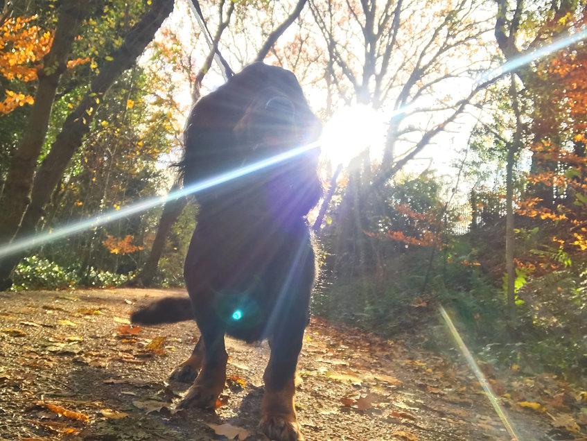 Bromsgrove Dog Walker.JPG