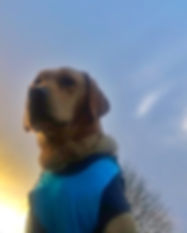 lapal dog walkers.JPG