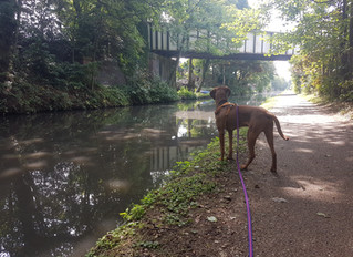 Campbells Canal Capers !