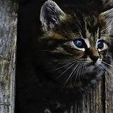 cat sitters based in Edgbaston.jpg