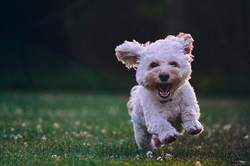 dog walker macclesfield.jpeg