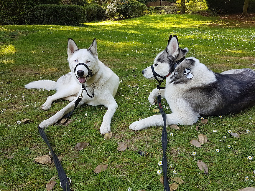 dog walker birmingham