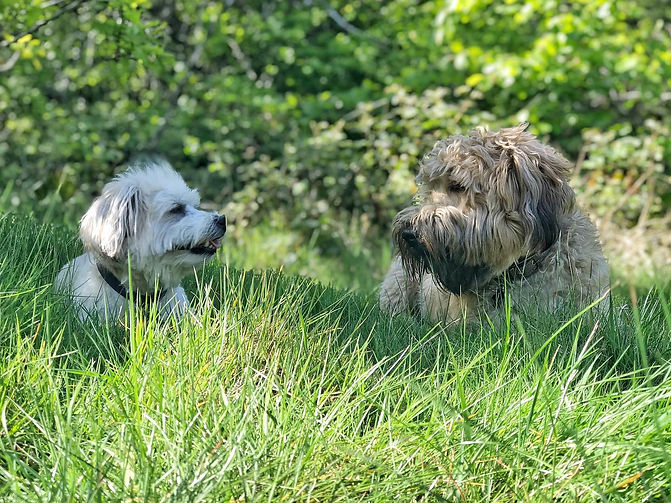 dog walkers sutton coldfield.jpg