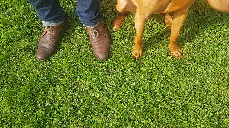 Smethwick Dog Walker