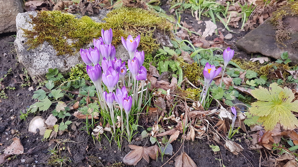 Spring has sprung in Harborne