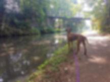 stourbridge dog walkers.jpg