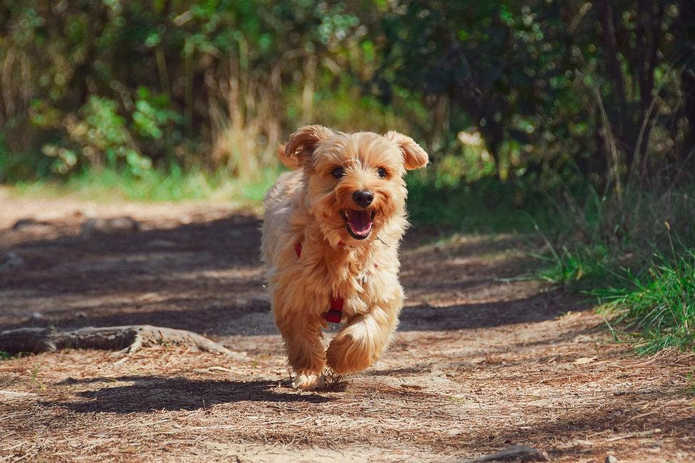 Kings Heath Dog Walker
