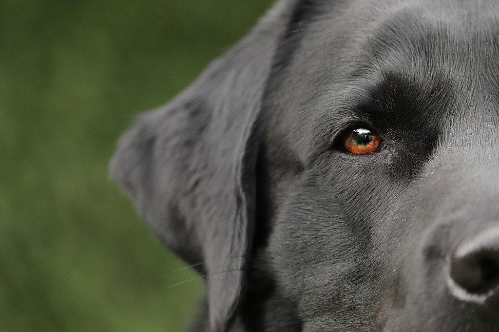 Bournville Dog Walker