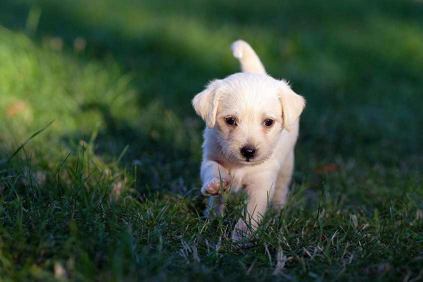 macclesfield dog walking services