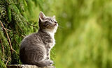 Smethwick cat sitter.jpg