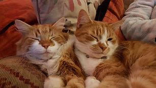 Cat Rescue Centre Birmingham.jpg