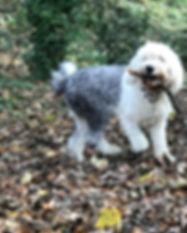 northfield dog walkers.JPG