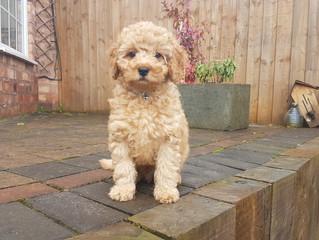Baxter, our super cute new customer !