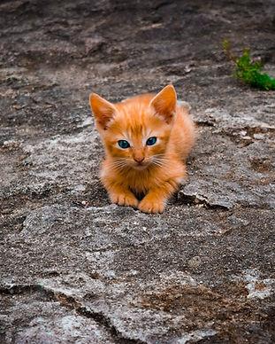 moseley cat sitters.jpg