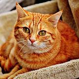 Harborne cat sitters.jpg