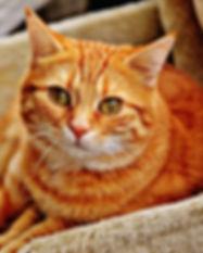edgbaston cat sitters.jpg