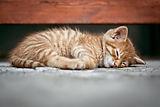 cat sitter in warley.jpg