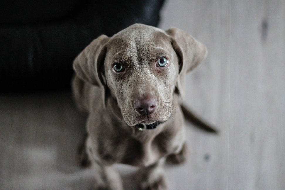 quinton dog walker