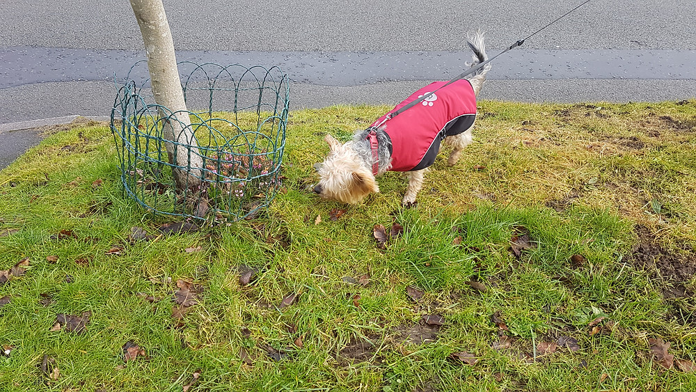 Harborne dog walking in the cold !