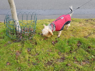 Bailey braving the cold in Harborne !