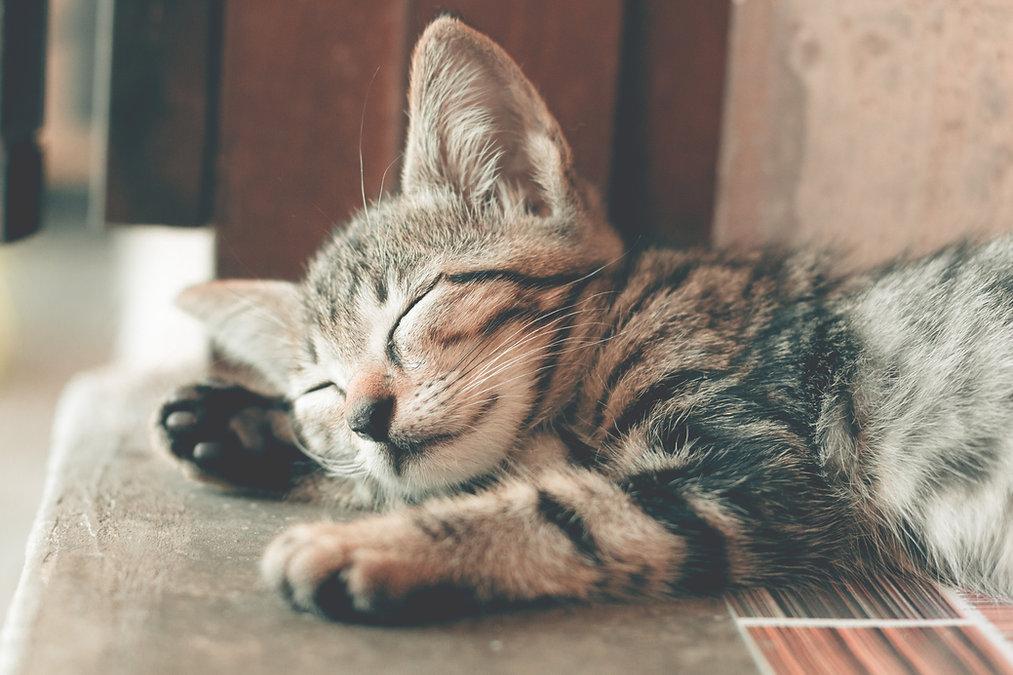 macclesfield cat sitters