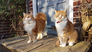 Cat Rehoming Charity Birmingham.jpg