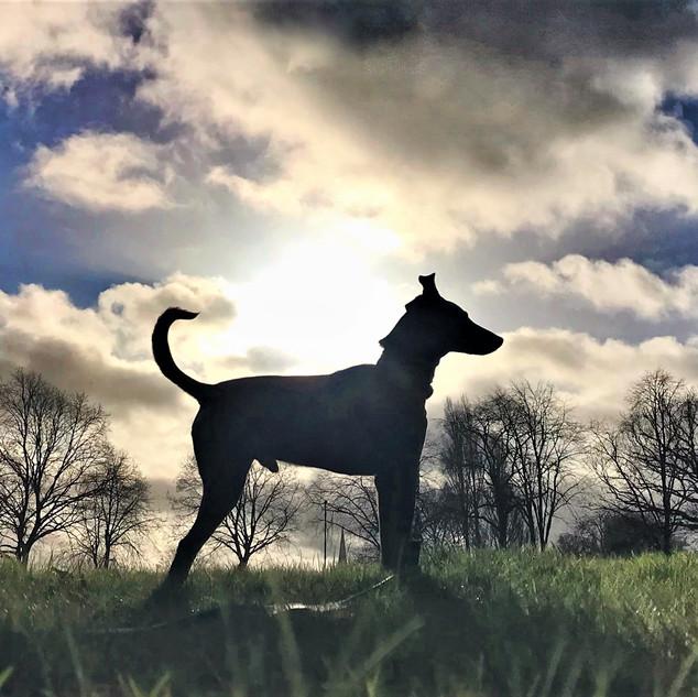 Dog Walker Covering Halesowen