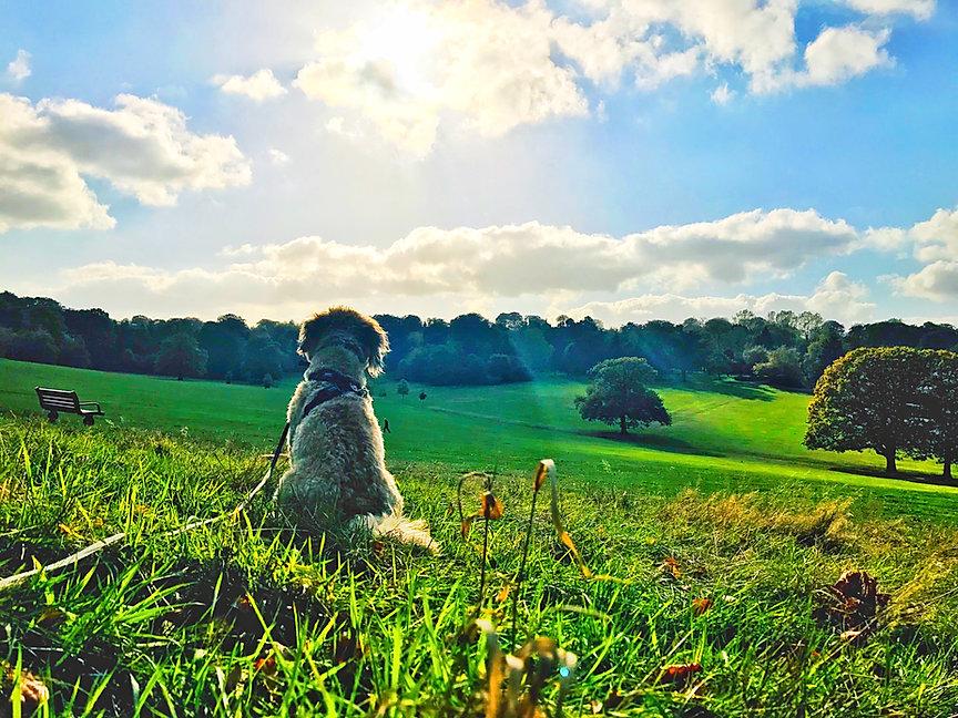Oldbury dog walker.JPG