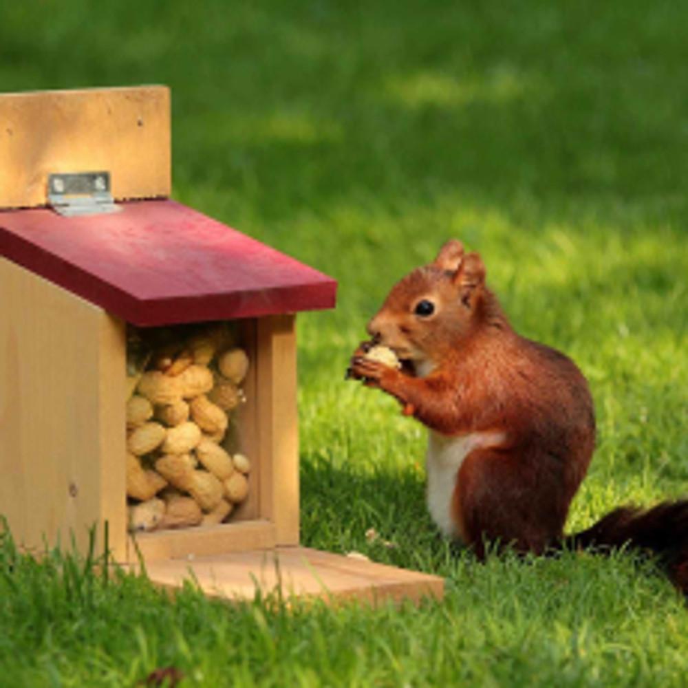 animal-squirrel-sciurus-bird.jpg