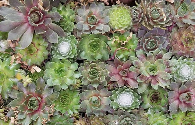 These could be yours! We just got a new batch of succulents in and they are beautiful! Take a terrar