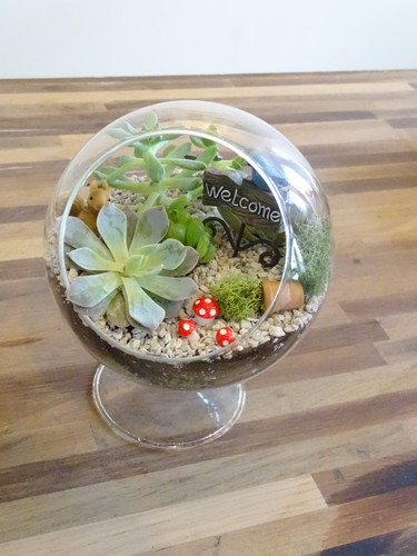 Terrariums and Fairy Gardens at The Devilish Egg