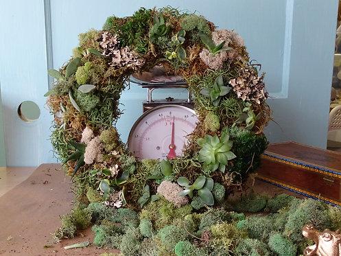 Live Succulent Wreath mayKIT (Set of 5)