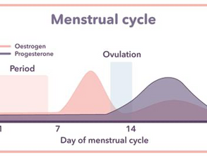 The menstrual cycle & fat loss
