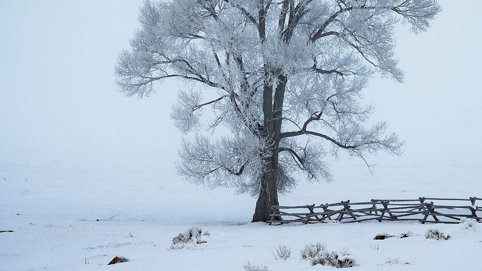 The Corner Tree