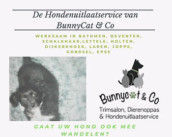 hondenuitlaatservice bunnycat & co.jpg